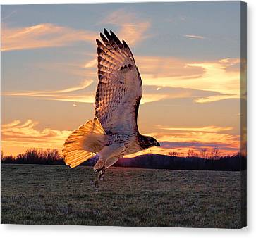 A Sunset Flight Canvas Print