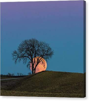 A Super Evening Canvas Print