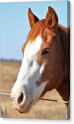 Canvas Print featuring the photograph A Sweet Face - Horse Portrait by Sheila Brown