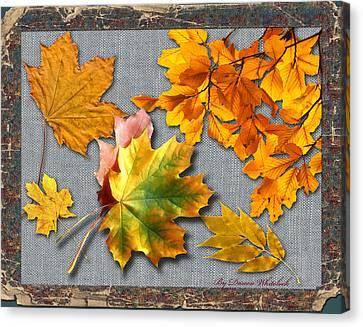 A Taste Of Fall Canvas Print by Doreen Whitelock