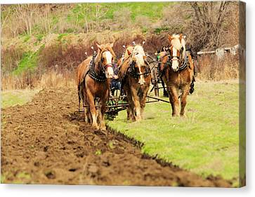 Plow Horse Canvas Print - A Team Of Horses At Work by Jeff Swan