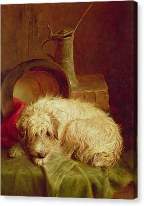 Sleeping Cat Canvas Print - A Terrier by John Fitz Marshall