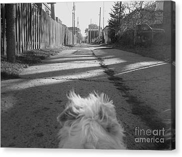 A Terriers Perspective Canvas Print by Reb Frost