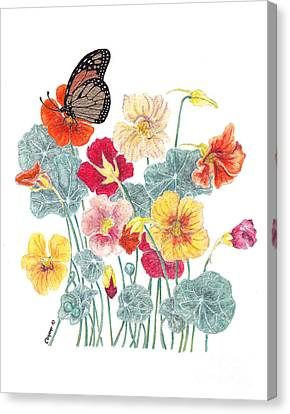 A Tethered Butterfly Canvas Print by Stanza Widen