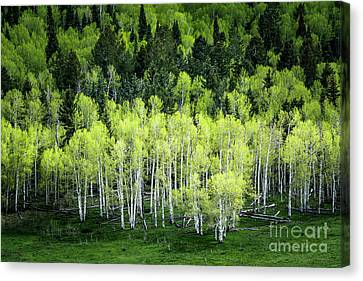 Canvas Print featuring the photograph A Thousand Shades Of Green by The Forests Edge Photography - Diane Sandoval