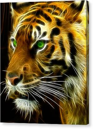 A Tiger's Stare Canvas Print