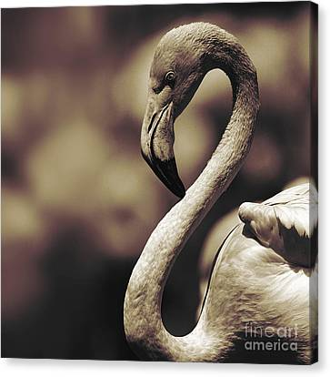 A Toned Tickled Pink Flamingo  Canvas Print