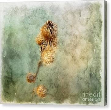 Canvas Print featuring the photograph A Touch Of Beauty by Brenda Bostic