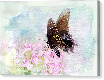Feeding Canvas Print - A Touch Of Heaven by Betty LaRue