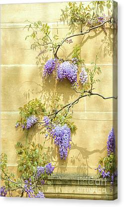 A Touch Of Lilac Canvas Print