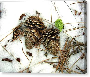 A Touch Of Moss Canvas Print