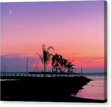 A Touch Of Violet Canvas Print by Brian Wallace