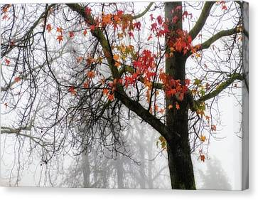 A Trace Of Autumn Canvas Print