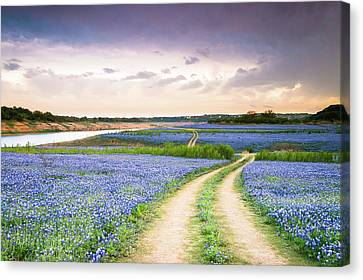 A Trail In The Middle Of Bluebonnet Field - Texas Wildflower Canvas Print by Ellie Teramoto
