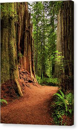 Canvas Print featuring the photograph A Trail In The Redwoods by James Eddy