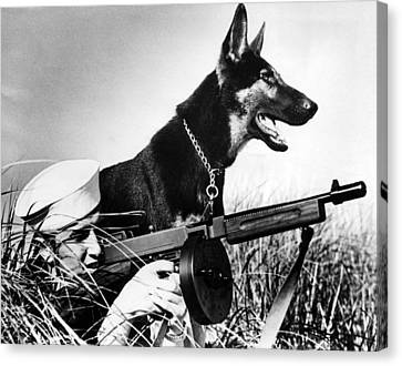 A Trained German Shepherd Sitting Watch Canvas Print by Everett