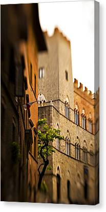 Sienna Italy Canvas Print - A Tree Grows by Marilyn Hunt