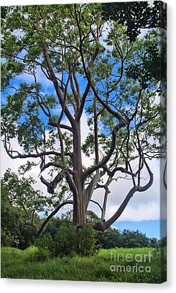 Canvas Print featuring the photograph A Tree In Paradise by DJ Florek