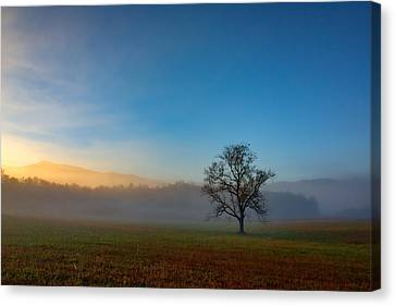 A Tree In The Mist In Cades Cove Canvas Print by Rick Berk