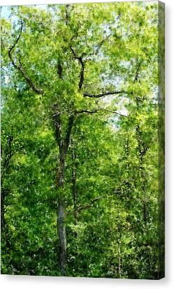 A Tree In The Woods At The Hacienda  Canvas Print by David Lane