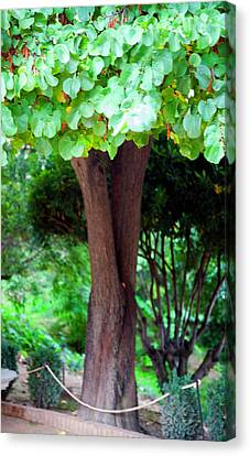 Canvas Print featuring the photograph A Tree Lovelier Than A Poem by Madeline Ellis