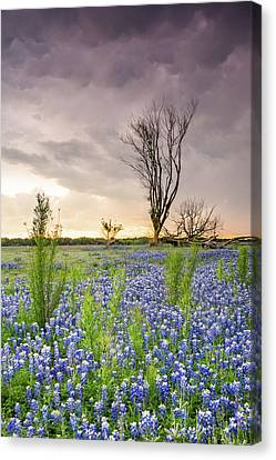 A Tree Of Wildflower Field Under Stormy Clouds - Texas Canvas Print by Ellie Teramoto