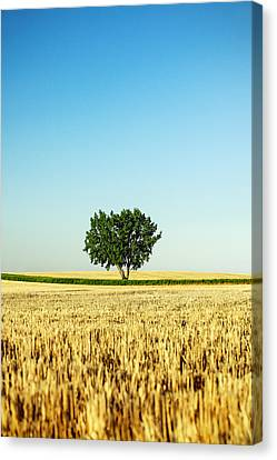 A Tree Stands Alone Canvas Print