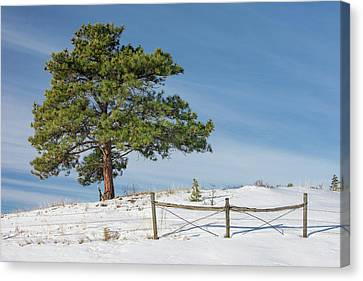 A Tree Warms Canvas Print by Todd Klassy