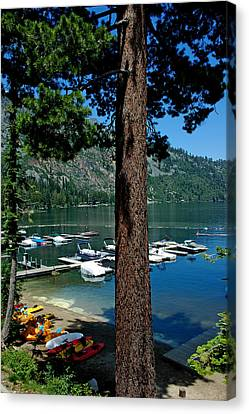 A Trees View Of Fallen Leaf Lake Canvas Print