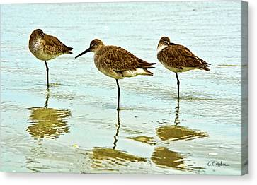 A Trio Canvas Print by Christopher Holmes