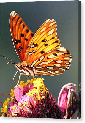 A Troubled Zinnia Canvas Print