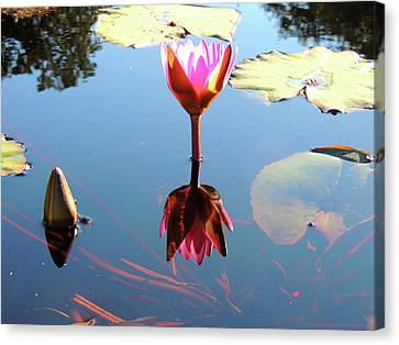 A True Reflection Canvas Print by Marilyn Holkham