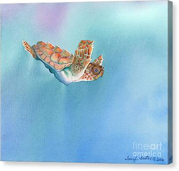 A Turtles Flight Canvas Print by Tracy L Teeter
