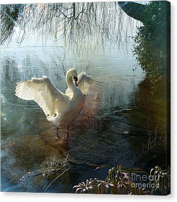 Canvas Print featuring the photograph A Very Fine Swan Indeed by LemonArt Photography