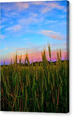 A View From Crop Level Canvas Print by Bill Tiepelman