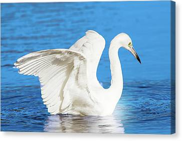 Beauty Mark Canvas Print - A Vision In White by Mark Andrew Thomas