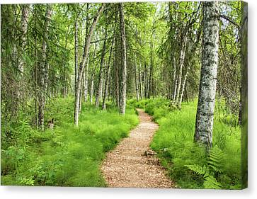 A Walk In The Woods Canvas Print by Edie Ann Mendenhall