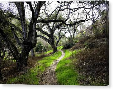 A Walk In The Woods Canvas Print by Joe Darin