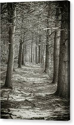 Canvas Print featuring the photograph A Walk In Walden Woods by Ike Krieger