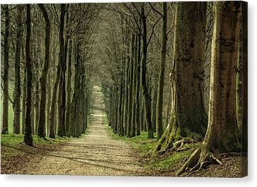 A Walk On Mariendaal Estate Canvas Print