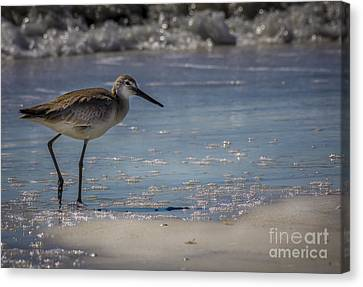 Great Blue Heron Canvas Print - A Walk On The Beach by Marvin Spates