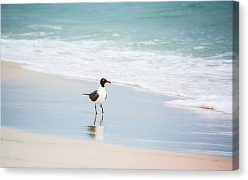 A Walk On The Beach Canvas Print by Shelby  Young