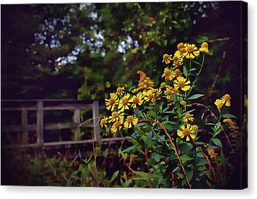 Canvas Print featuring the photograph A Walk With Wildflowers by Jessica Brawley