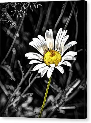 A Warm State Of Mind Canvas Print