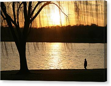 A Weeping Willow Curtains A Walker Canvas Print by Stephen St. John