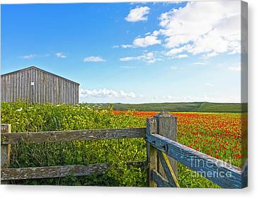 A West Pentire Farm Canvas Print by Terri Waters