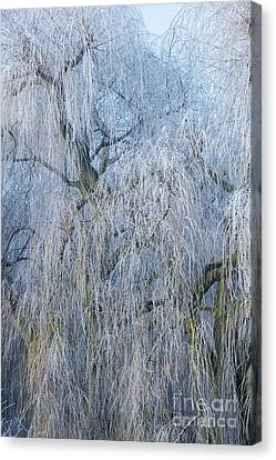 A Winter Willow Weeps Canvas Print by Tim Gainey