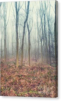 A Winter Woodland Canvas Print