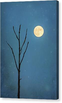 A Winters Dream Canvas Print by Terry DeLuco