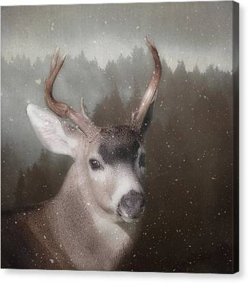 Canvas Print featuring the photograph A Winter's Night by Sally Banfill